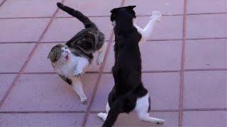 Vicious Cat Fight Caught On Camera   4K   GoPro Hero 7 Black