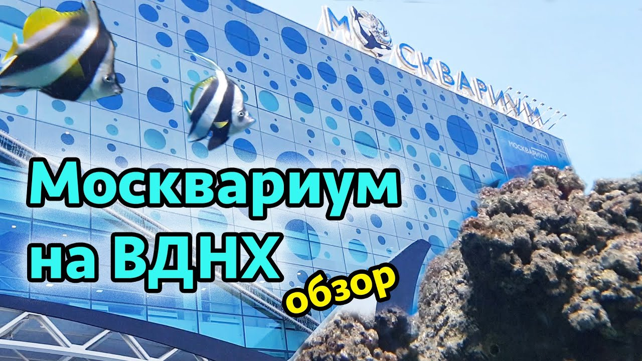 Москвариум на ВДНХ Москва - обзор и аквариума и цены. Достопримечательности Москвы.