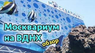 Фото Москвариум на ВДНХ Москва - обзор и аквариума и цены. Достопримечательности Москвы.