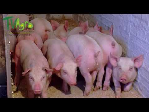 Producción Acuícola Y Porcícola En Honduras - TvAgro Por Juan Gonzalo Angel