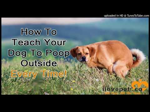How To Get Your Dog To Poop Outside Every Time