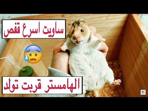 سويت اسرع  قفص للهامستر الي قربت تولد 😍 صنعته بدولاب قديم 🌚 A cage for hamsters   Mohamed Vlog