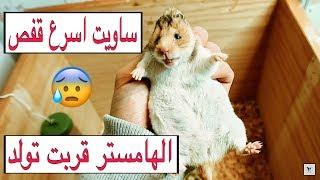 سويت اسرع  قفص للهامستر الي قربت تولد 😍 صنعته بدولاب قديم 🌚 A cage for hamsters | Mohamed Vlog