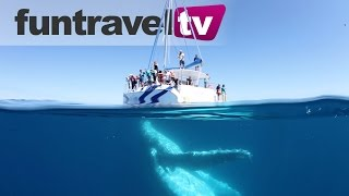 Hervey Bay is Australia's best place to go whale watching