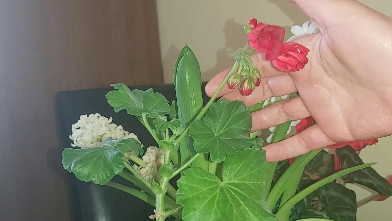 remediu pentru flori parazite