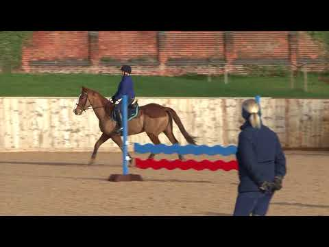 British Showjumping - Training for those returning to Affiliated competition Part 1