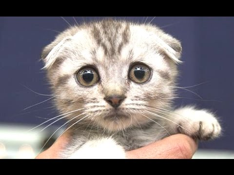 cute cats a cute cat videos compilation 2015 youtube