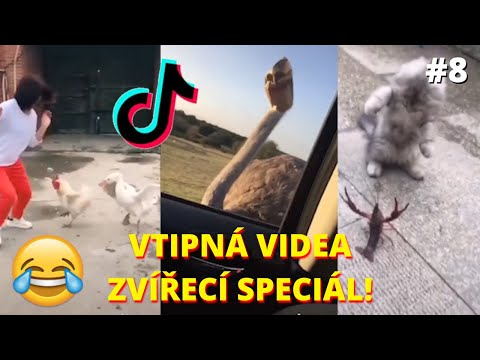 # 14😁 Funniest 🐶 Dogs and 😻 Cats - Awesome Funny Pet Animals' Life Videos 😇 from YouTube · Duration:  6 minutes 22 seconds