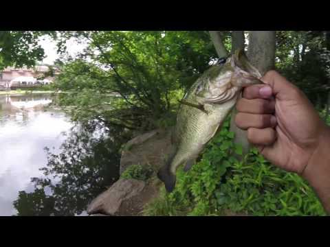 NYC Bass Fishing: Van Cortlandt Pt. 1