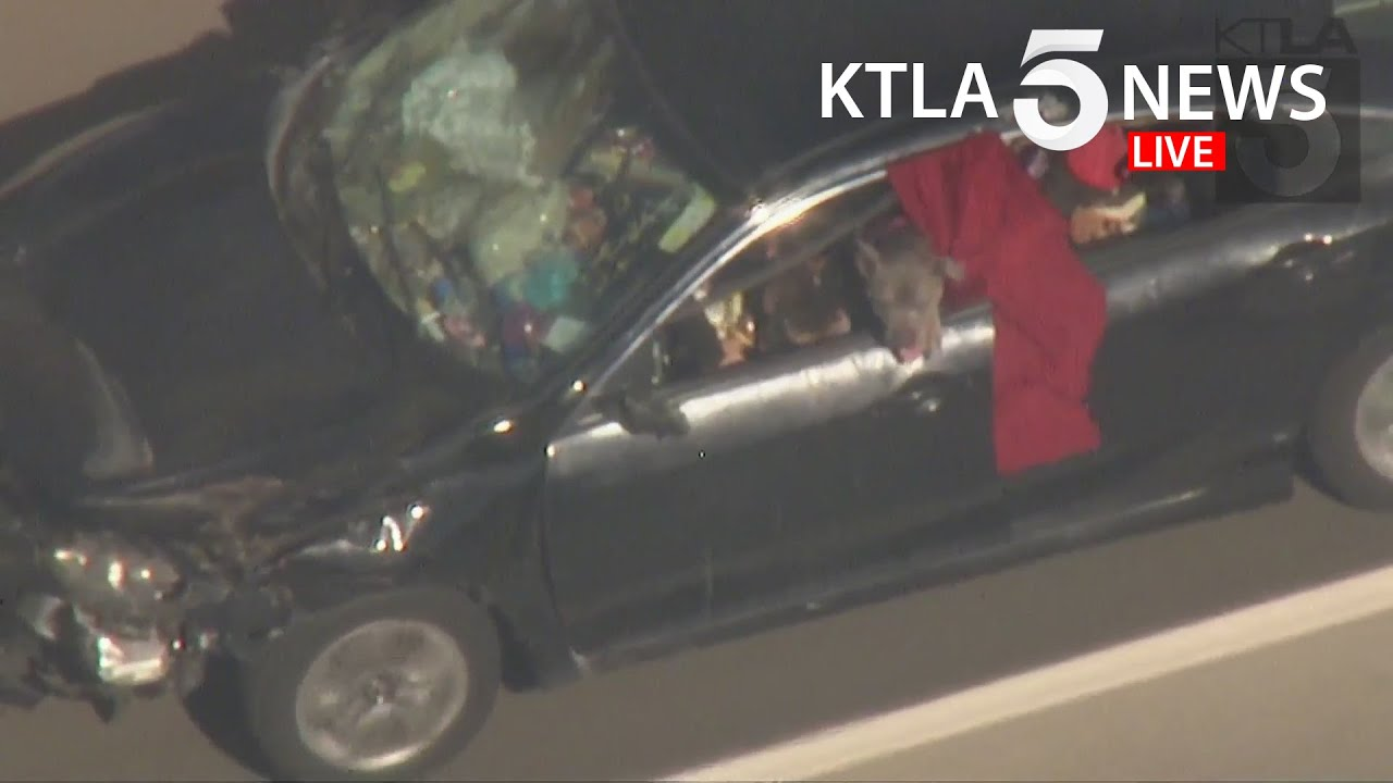 Driver in custody after leading pursuit with pit bull hanging out window in San Fernando Valley