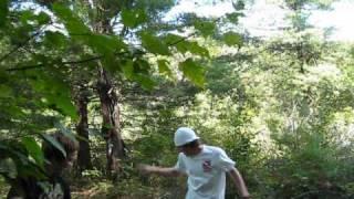 The Gumdrop Forest