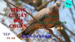 Tiếng chim cu gáy mồi chuẩn nhất, Không tạp âm, file MP3 chuẩn - Phần 1