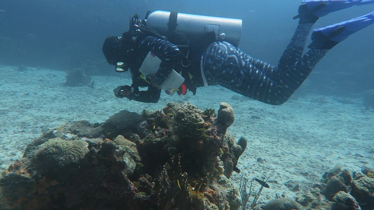 Stony Coral Tissue Loss Disease Response