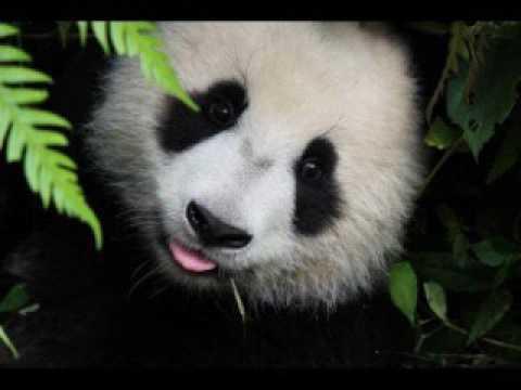 Panda - Desiigner [1 hour]
