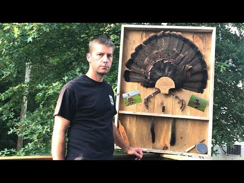 DIY Turkey Fan Mount / Turkey Shadow Box