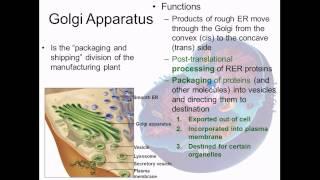 Cytoplasm   membranous organelles
