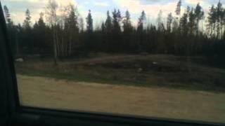 Последствия лесного пожара в р-не Верхней Санарки