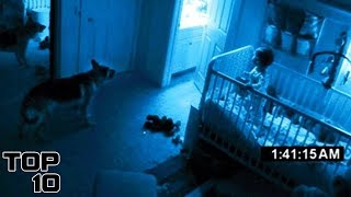 Top 10 Scary Times A Dog Saw A Ghost