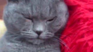 Кот сразу после кастрации.