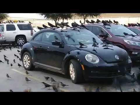 Carpark Crow Convention || ViralHog