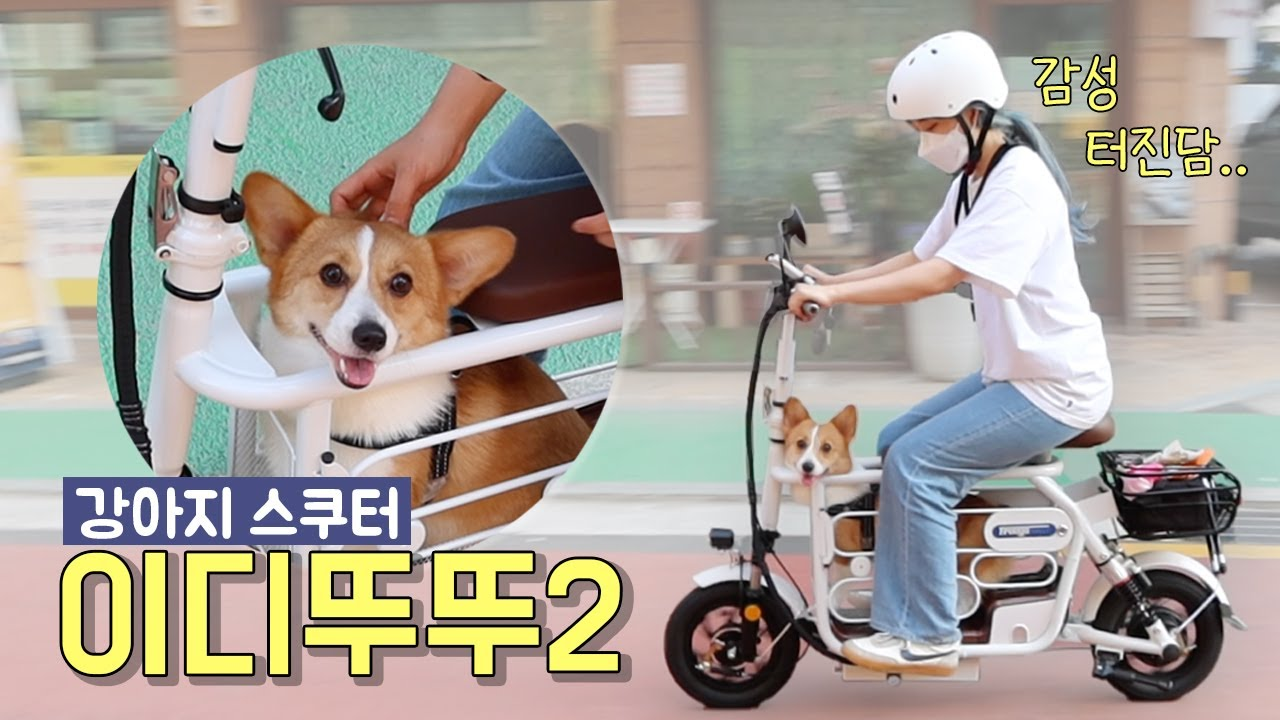 강아지와 함께 이디뚜뚜2 어때요?❤️속도, 사이즈, 오르막길 꼼꼼 리뷰 [프리고 다이렉트]