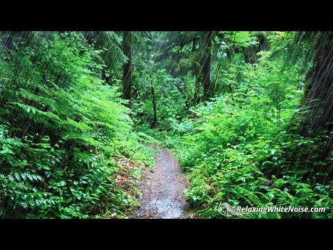 Rainy Day Pacific Northwest | Rain Sounds for Sleeping, Studying, Reading, Homework | White Noise