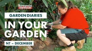 Gardening in December | Northern Territory | Bunnings Garden Diary