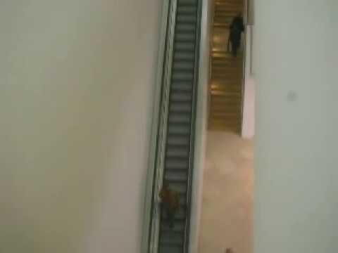 World's Longest Art Gallery Escalator inside National Portrait Gallery London