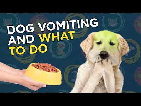 what-to-do-when-your-dog-is-vomiting