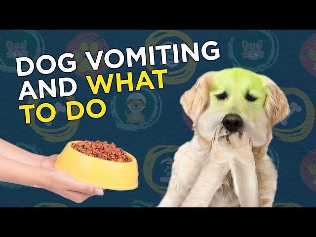 What to do when your dog is vomiting
