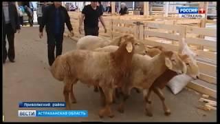 В Астраханскую область привезли племенных баранов и коз