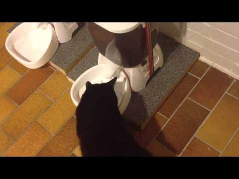 Blacky mit futterautomat cat mate c3000