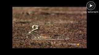 Ultra Instinct Mongoose