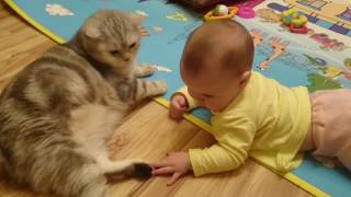 Ребенок и кот. Baby and a cat, funny videos, cats compilation