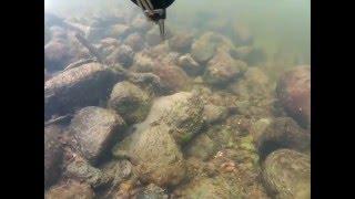 подводная охота на Гродненском ГЕС