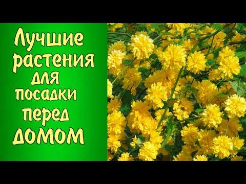 ЧТО ПОСАДИТЬ перед ДОМОМ? Лучшие растения для посадки перед домом.Цветник-клумба возле дома.