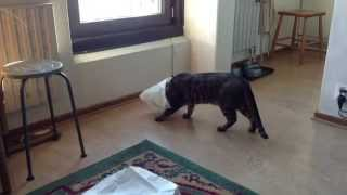Funny cat with plastic bag