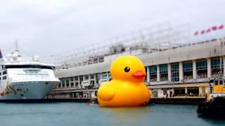 巨大アヒルちゃん 香港に登場 Rubber Duck Project 2013 Hong Kong Tour thumbnail