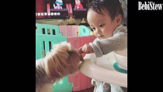 CUTEST BABY & Dog Videos Will Make You Smile ALL DAY