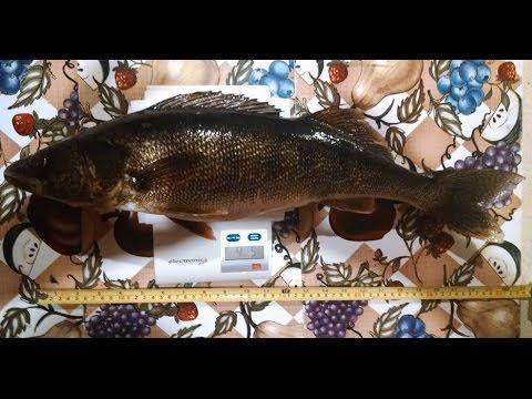 Walleye Night Fishing Video: Rapala Husky Jerk Silver-Blue HJ-12 SB