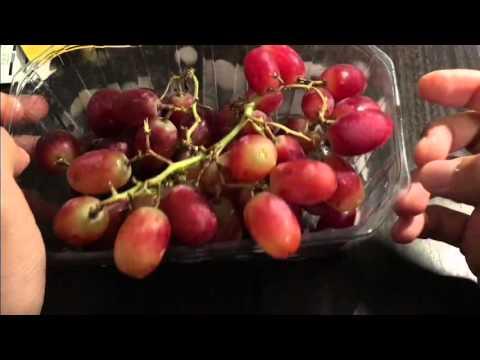 آموزش درست کردن شراب شیراز 3 - How To Make Shiraz Wine At Home