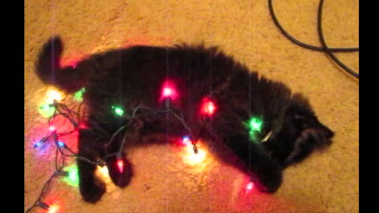 Cute Cat LOVES Christmas Lights - YouTube