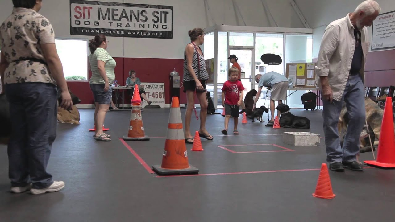 Group Dog Training Classes At Sit Means Sit Dog Socialization