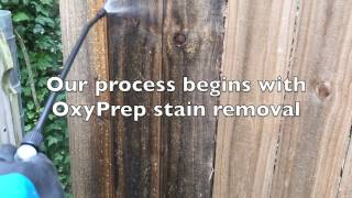 Fixed Fast: OxyPrep Mold Stain Removal (step 1)