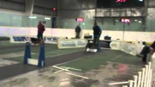 Go All Out! Dogsports Flyball Lloydminster 2012