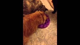 Kitties & Northmate Feeder