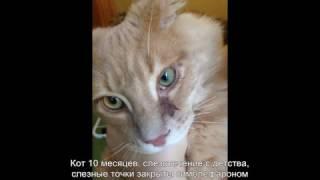 Активация слезных точек у кота