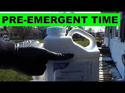 How to apply pre emergent to your lawn