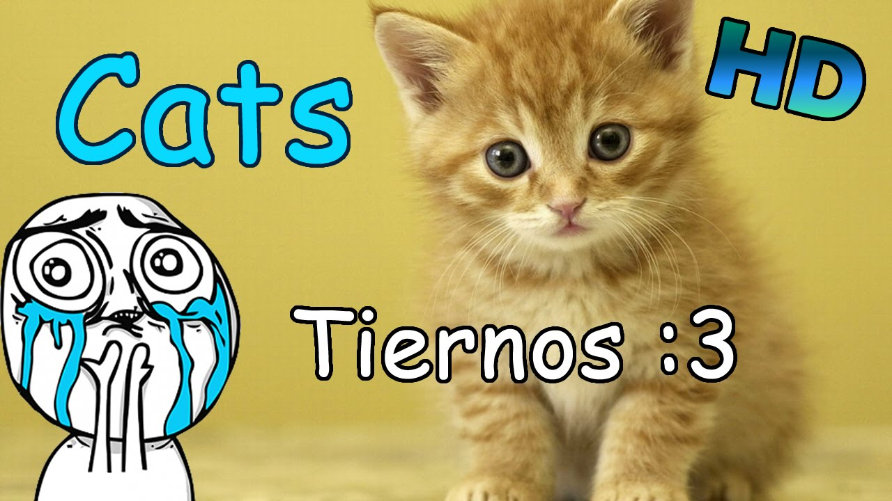 Wallpapers De Gatos Tiernos En Hd Youtube