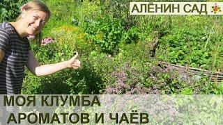 Моя КЛУМБА с ПРЯНЫМИ травами или Аптекарский огород // My sample of herb or kitchen garden